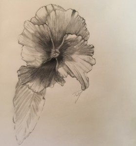 The-Pansy